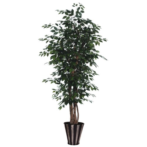 Vickerman Co. Blue Ridge Fir Round Executive Ficus Tree in Pot