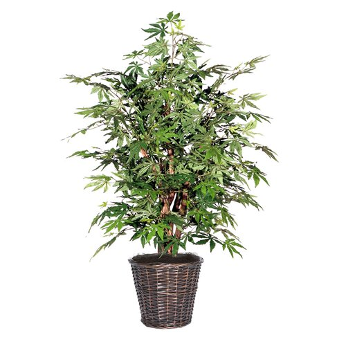 Vickerman Co. Blue Japanese Maple Tree in Basket