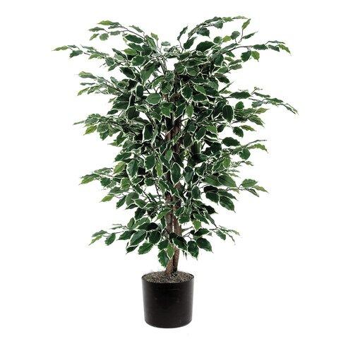 Vickerman Co. Ficus Variegated Bush Tree in Pot