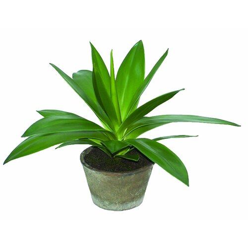 Sage & Co. Sonoran Highlands Potted Agave Succulent Desk Top Plant in Pot