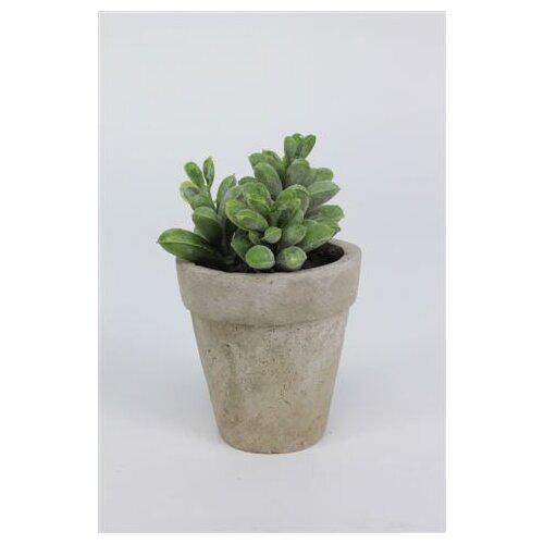 Sage & Co. Sonoran Highlands Potted Moonstone Succulent Desk Top Plant in Pot