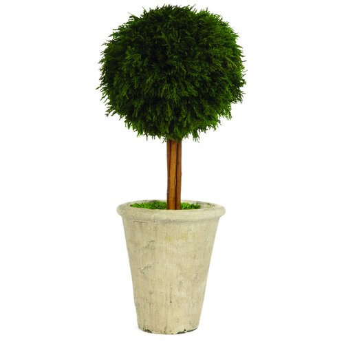 Sage & Co. Cypress Single Ball Topiary in Pot