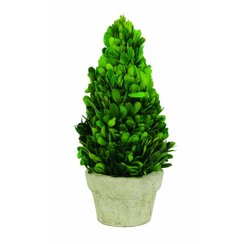 Sage & Co. Preserved Boxwood Cone Desk Top Plant in Planter