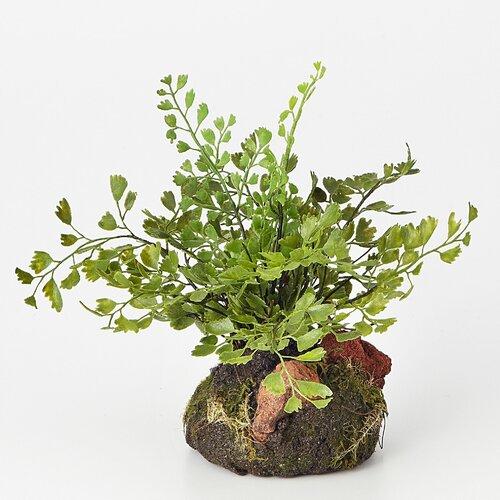 Sage & Co. Maidenhair Fern Plant Drop-In