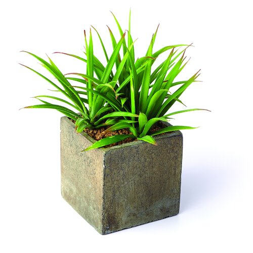 Sage & Co. Sonoran Highlands Yucca Desk Top Plant in Pot
