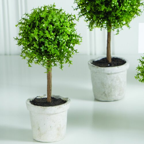 Sage & Co. Baby Tears Ball Topiary in Pot