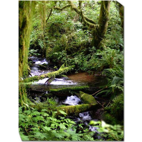 West of the Wind Outdoor Canvas Art Forest Stream Photographic Print on Canvas