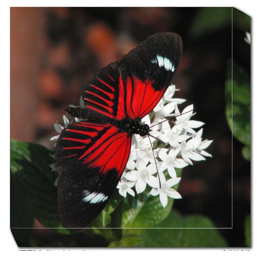 West of the Wind Outdoor Canvas Art Butterfly Photographic Print on Canvas