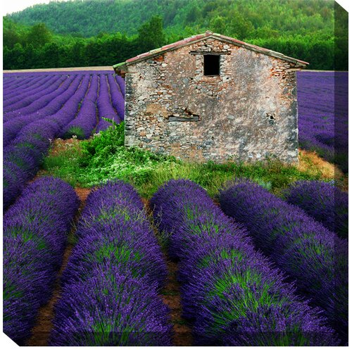 West of the Wind Outdoor Canvas Art La Lavender Photographic Print on Canvas