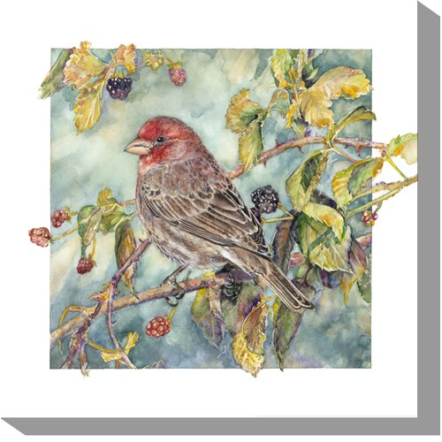 House Finch Painting Print on Canvas