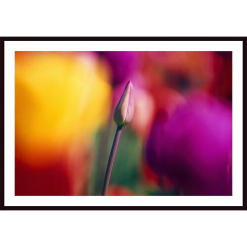 'Selective Focus Tulip Flower Field' by Craig Tuttle Framed Photographic Print