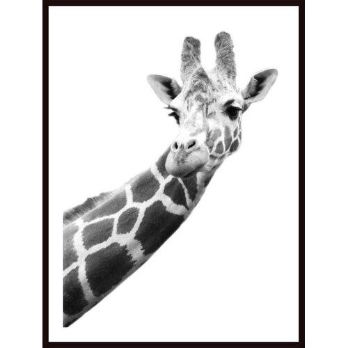 'Portrait of a Giraffe' by Darren Greenwood Framed Photographic Print