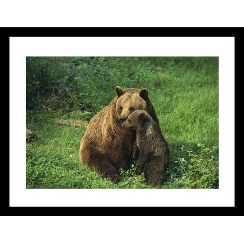 National Geographic Bear with Cub Bayerischer Wald National Park Germany by Norbert Rosing ...