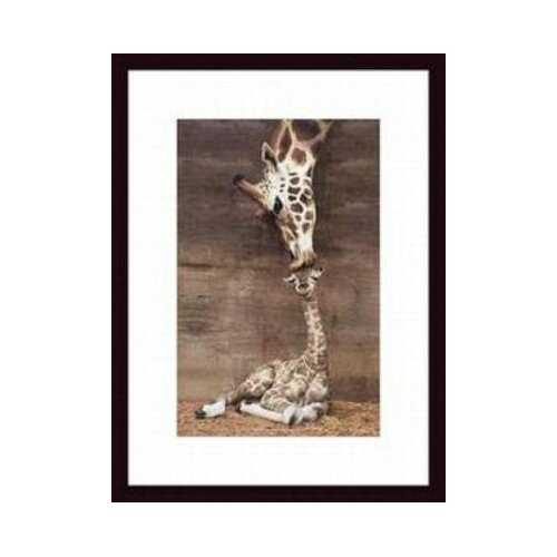 Printfinders 'Makulu' by Ron D'Raine Framed Photographic Print