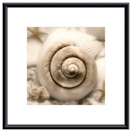 Iridescent Seashell I by Donna Geissler Framed Photographic Print