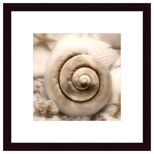Barewalls Iridescent Seashell I by Donna Geissler Framed Photographic Print