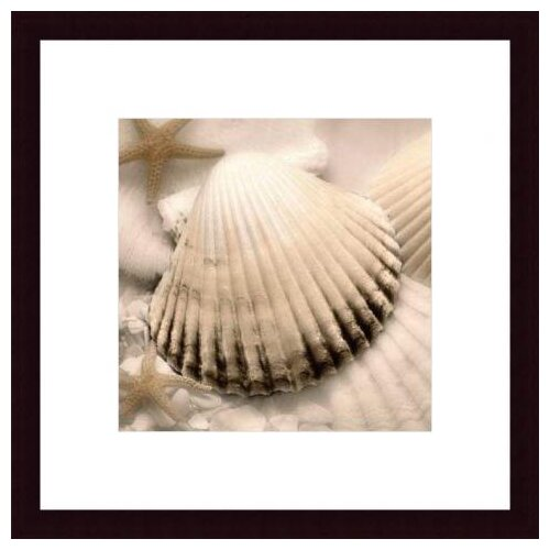 Barewalls Iridescent Seashell II by Donna Geissler Framed Photographic Print