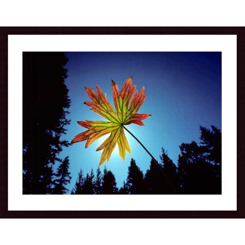 Barewalls 'Leaf' by John K. Nakata Framed Photographic Print