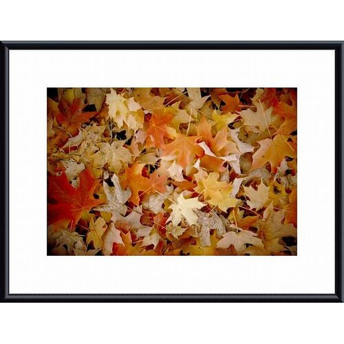 'Maple Leaf Carpet' by John K. Nakata Framed Photographic Print