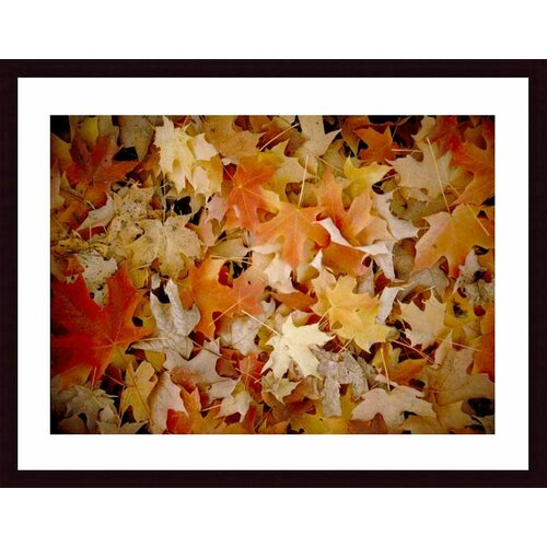 Barewalls 'Maple Leaf Carpet' by John K. Nakata Framed Photographic Print