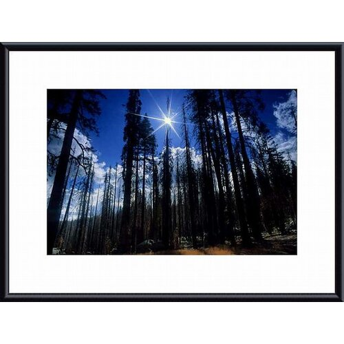 Barewalls 'Star Bright' by John K. Nakata Framed Photographic Print