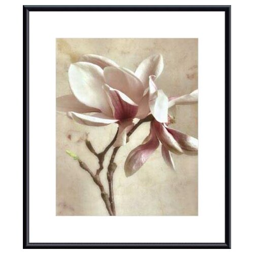 Barewalls 'Pink Magnolia I' by Donna Geissler Framed Photographic Print