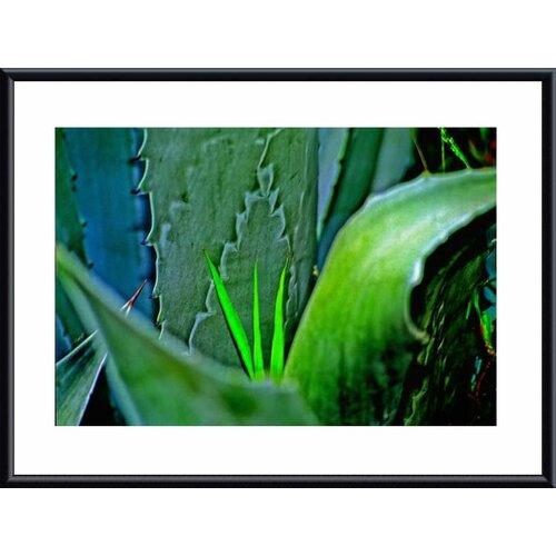 Barewalls 'Grass and Cactus' by John K. Nakata Framed Photographic Print