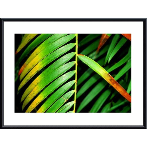 Barewalls 'Colorful Palm Leaf' by John K. Nakata Framed Photographic Print