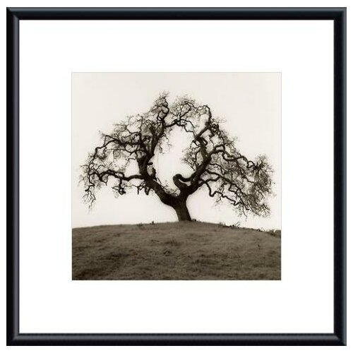 Barewalls 'Hillside Oak Tree' by Alan Blaustein Framed Photographic Print