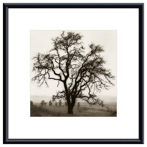 'Country Oak Tree' by Alan Blaustein Framed Photographic Print