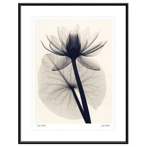 Barewalls 'Tropical Water Lily Metal' by Judith McMillan Framed Photographic Print