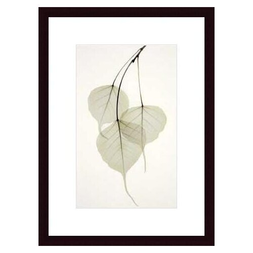 Barewalls Bo Tree by Albert Koetsier Framed Photographic Print