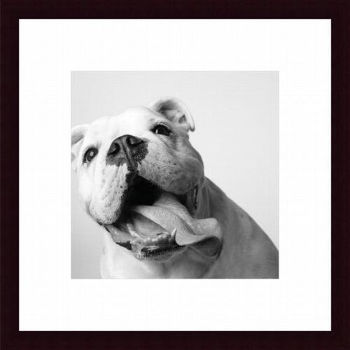 Barewalls Luca by Amanda Jones Framed Photographic Print
