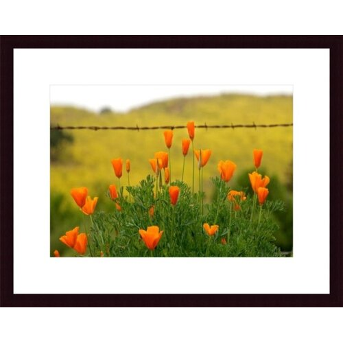 Poppies and Barbed Wire by John K. Nakata Framed Photographic Print