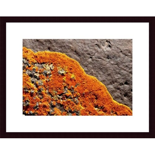 Barewalls Lichen Abstract by John K. Nakata Framed Photographic Print