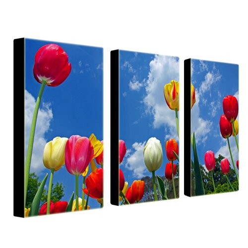 Trademark Global Heaven by Cat Eyes 3 Piece Photographic Print on Canvas Set