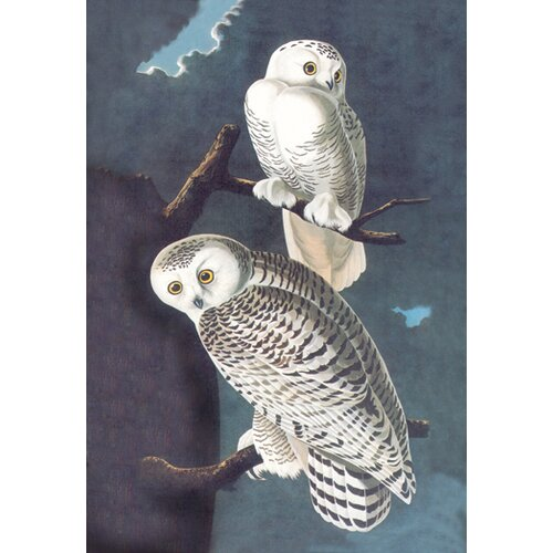 Buyenlarge Snowy Owl by John James Audubon Graphic Art on Canvas