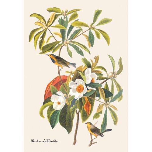 Buyenlarge Bachman's Warbler by John James Audubon Graphic Art on Canvas