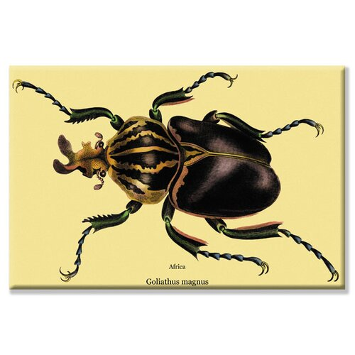 Beetle African Goliathus Magnus #2 Graphic Art on Canvas