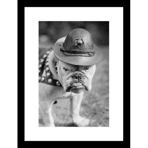 Marine Corps Mascot Looks Like the Average Drill Instructor Framed Photographic Print