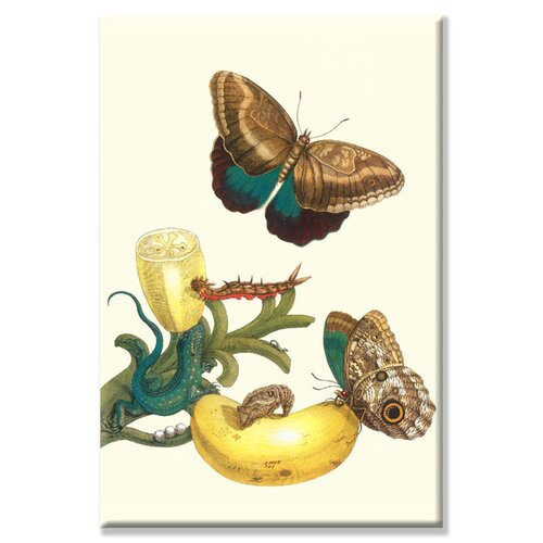 Banana Plant with Teucer Giant Owl Butterfly and a Rainbow Whiptail Lizard Graphic Art on ...