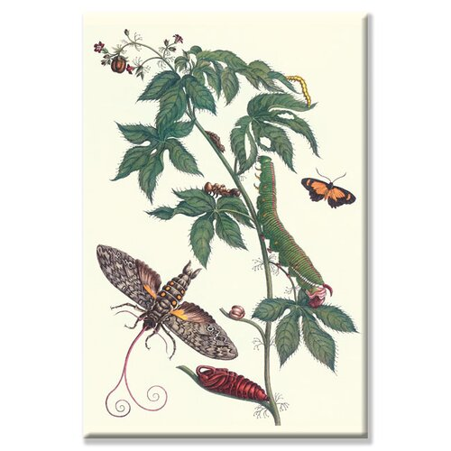 Bellyache Bush with a Giant Sphinx Moth and a Metalmark Butterfly Graphic Art on Canvas ...
