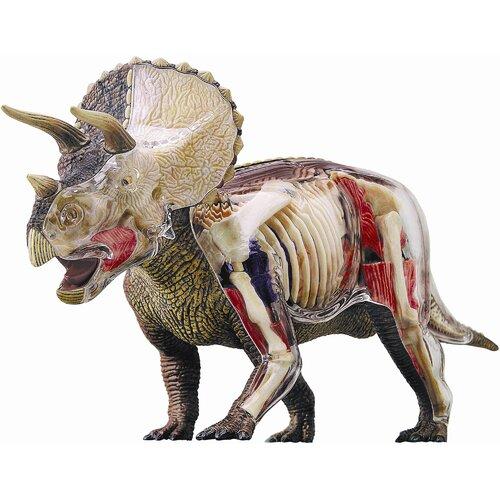 4D Vision Triceratops Model