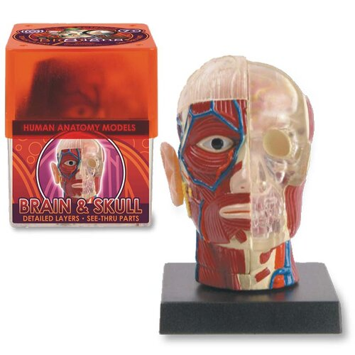 Tedco Toys Bio Signs 6 Piece Brain and Skull Set