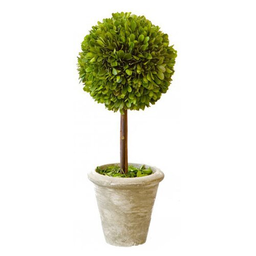 Mills Floral Box Single Topiary