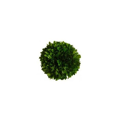 Mills Floral Boxwood Ball Desk Top Plant