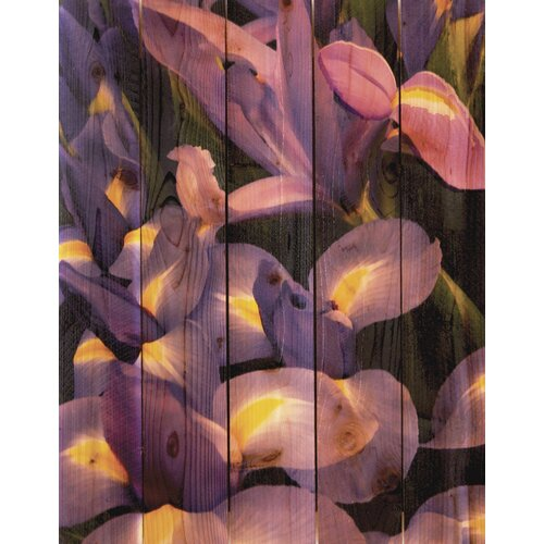 French Iris Photographic Print