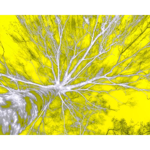 Carlyle Fine Art Nature In The Sky by Jordan Carlyle Graphic Art