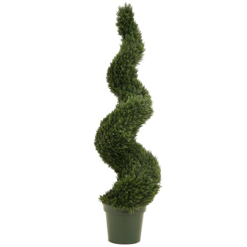Narrow Spiral Cedar Topiary in Plastic Liner