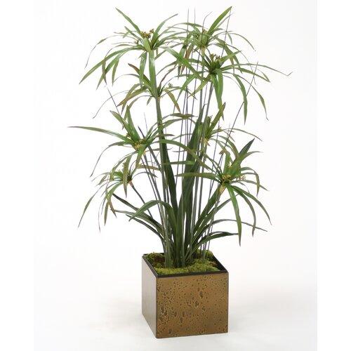 Distinctive Designs Silk Umbrella Papyrus Grass in Square Planter
